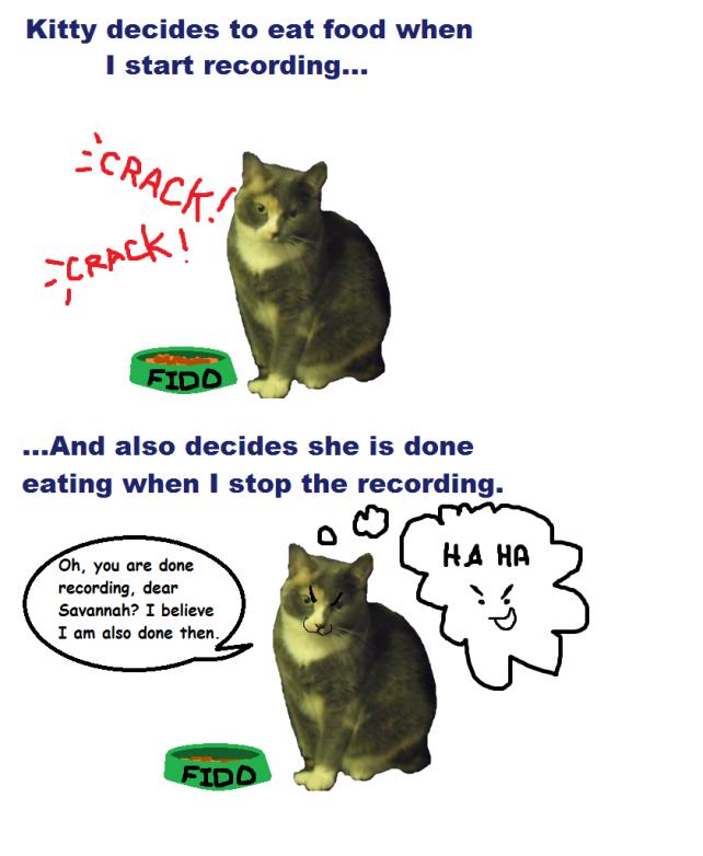 kitty eating food